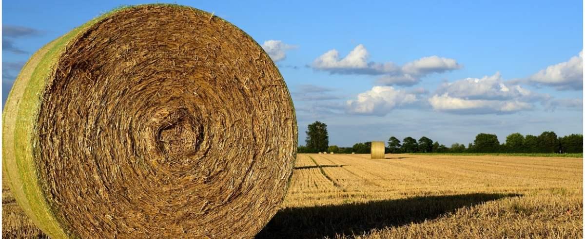 rolnictwo-pixabay-ulleo