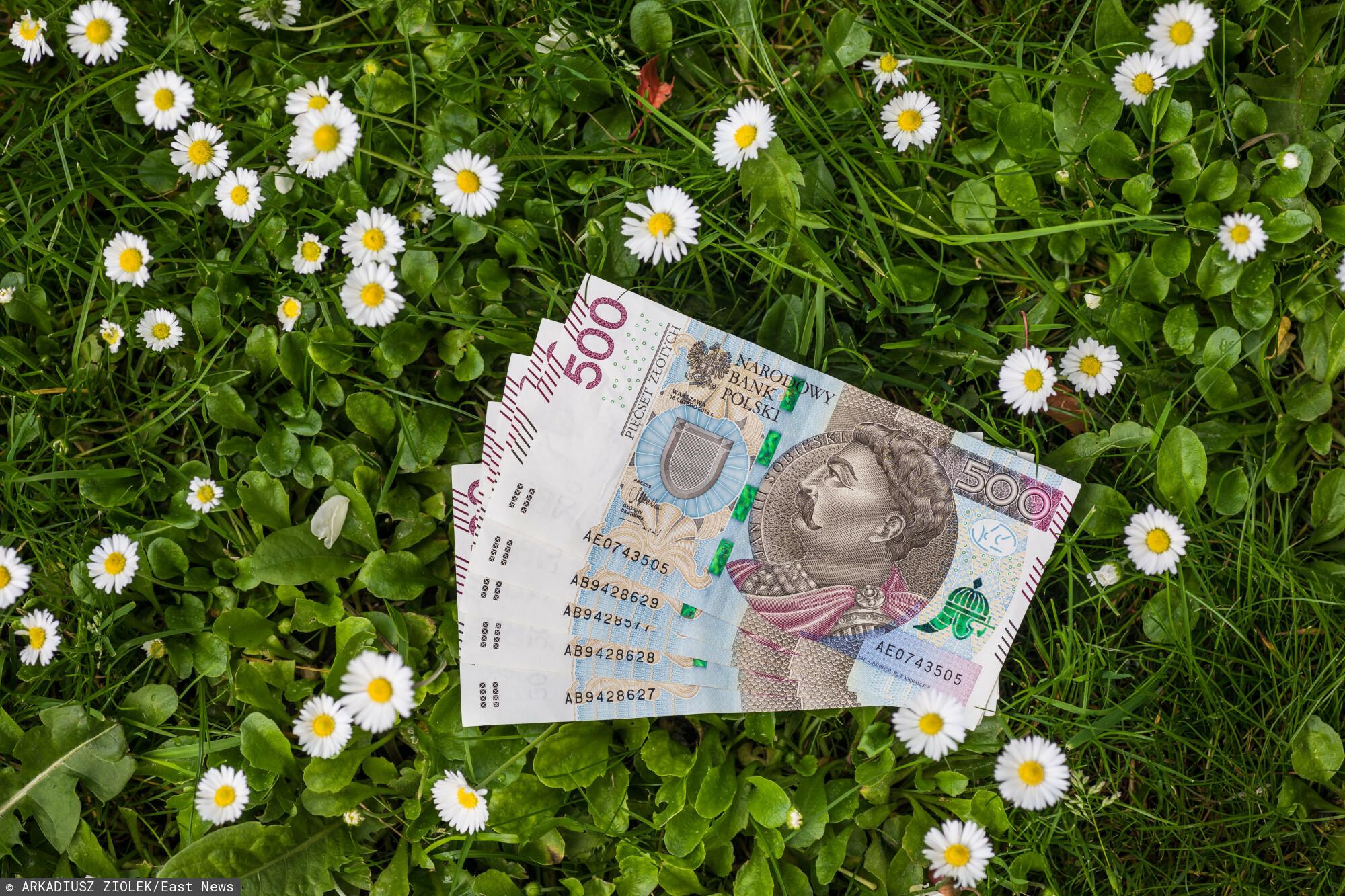fot: Arkadiusz Ziolek/ East News. 04.05.2020. n/z Polskie banknoty w trawie.