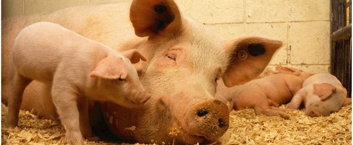 Mięso i inne produkty drożeją. Wzrost skupu może przełożyć się na ceny w sklepach.