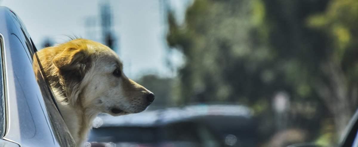Kancelaria Sejmu chciała wydać 300 tys. złotych na auto dla psów.
