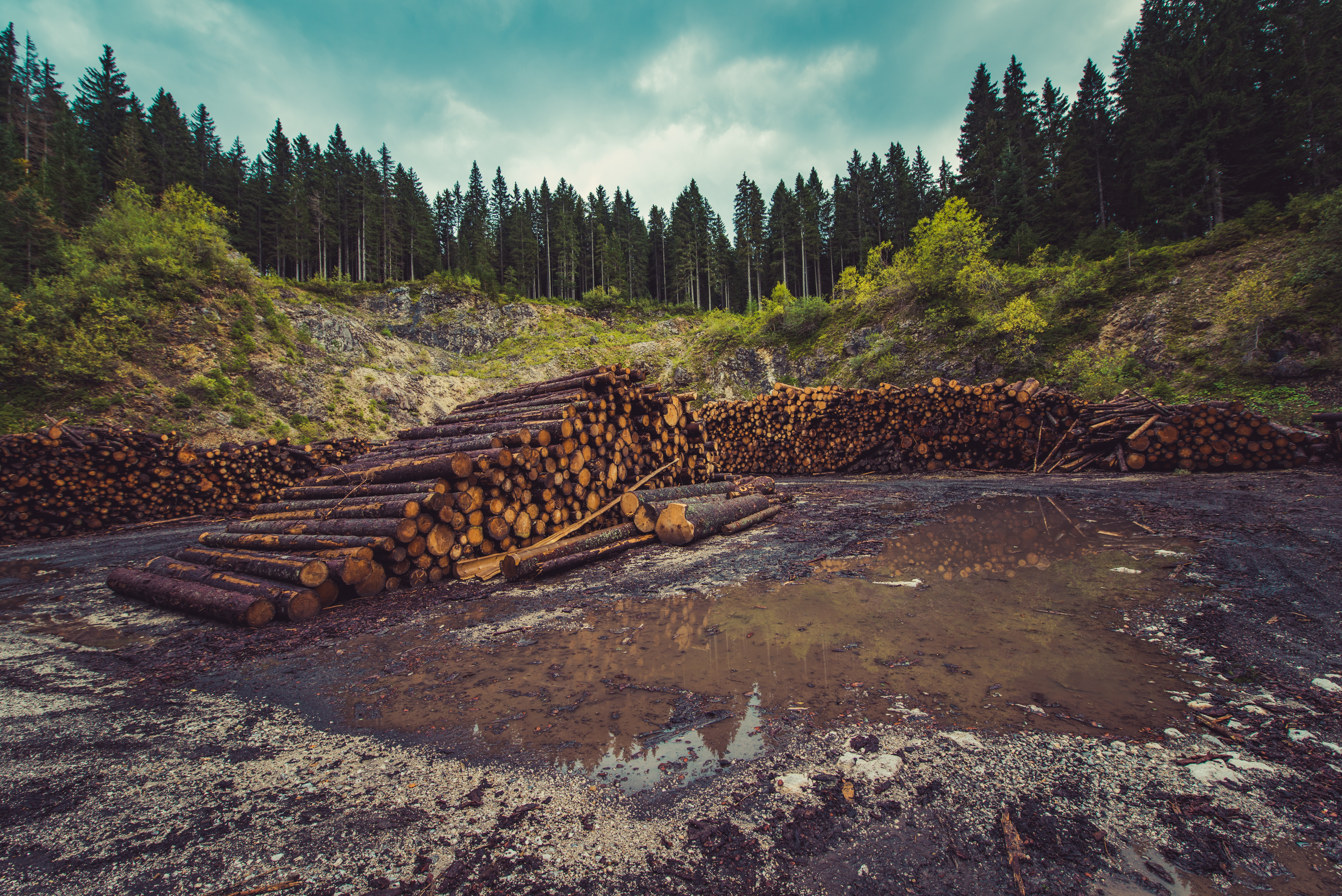 logs deforestation climate change