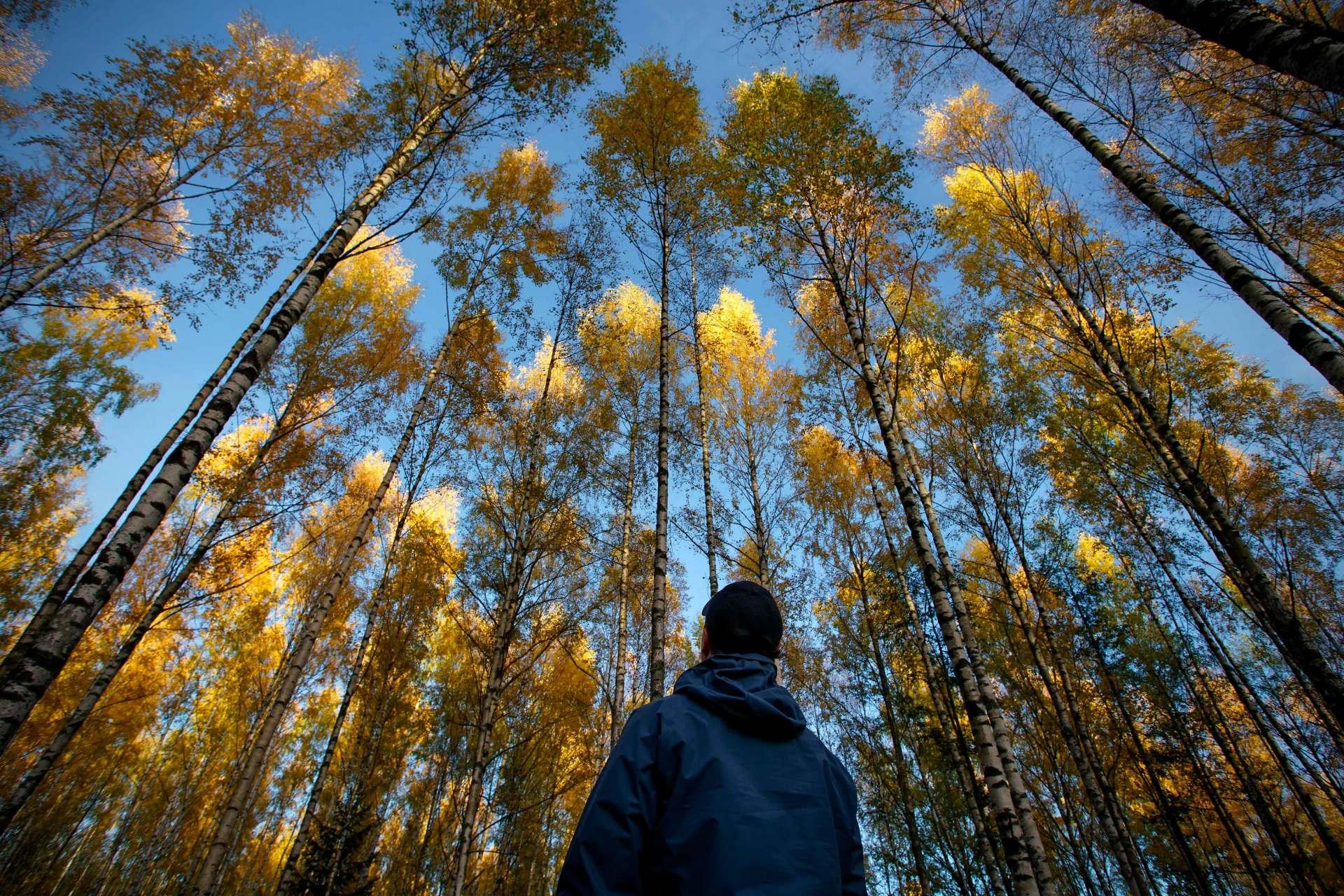Metsän Arvo Perunkirjoituksessa