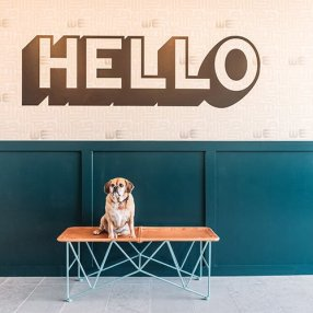 Dog under Hello in WeWork