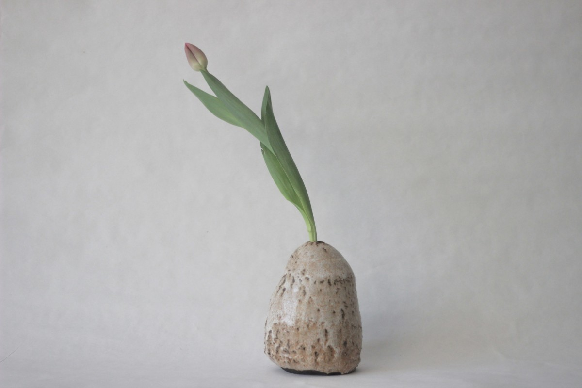 Glazed terra nigra clay vase with tulip on gray background