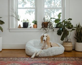 How to Shop (& Save) on Dog Beds at Target