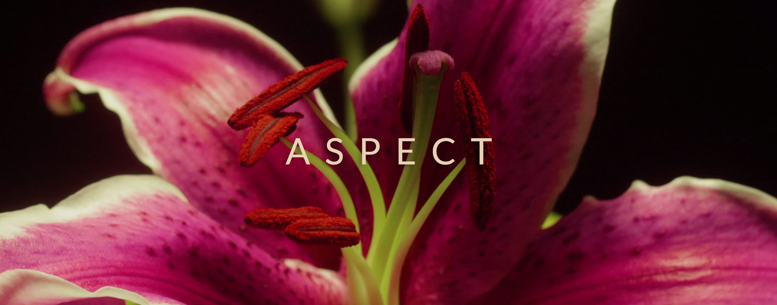 Aspect - Minimalist Graphic Elements