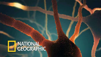 National Geographic Case Study Image