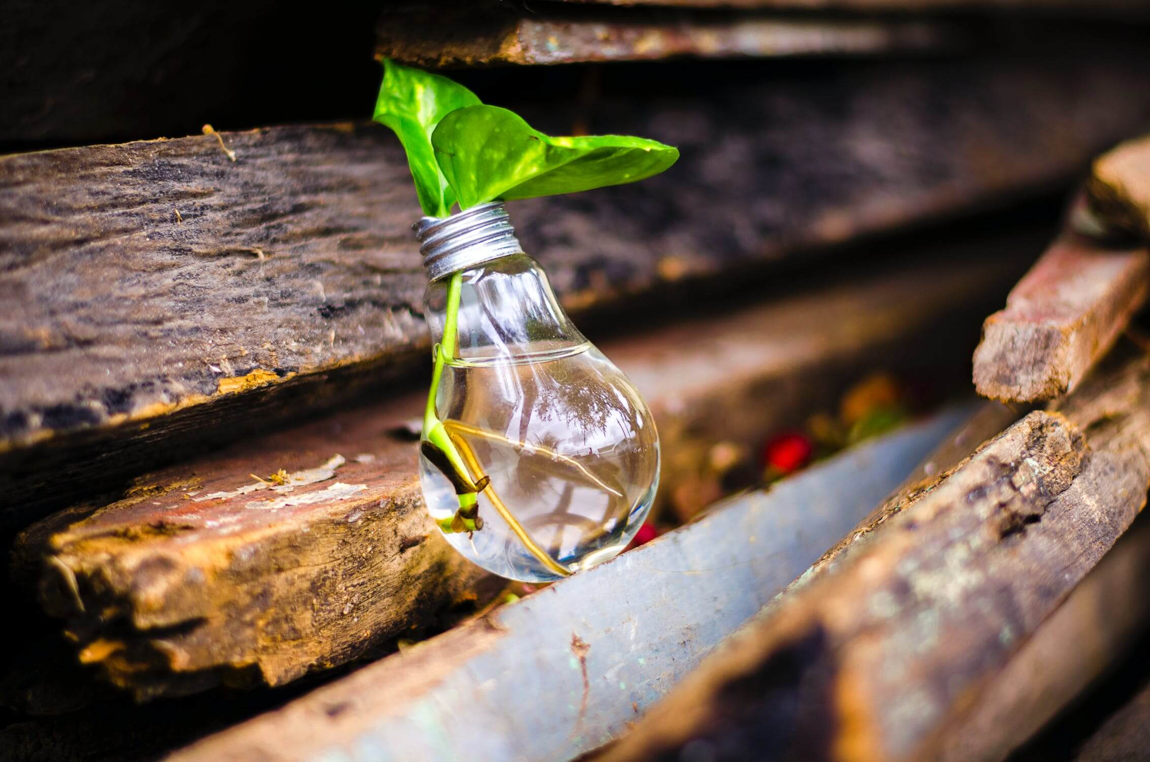 5 idées d'investissement rentable et accessible à tous