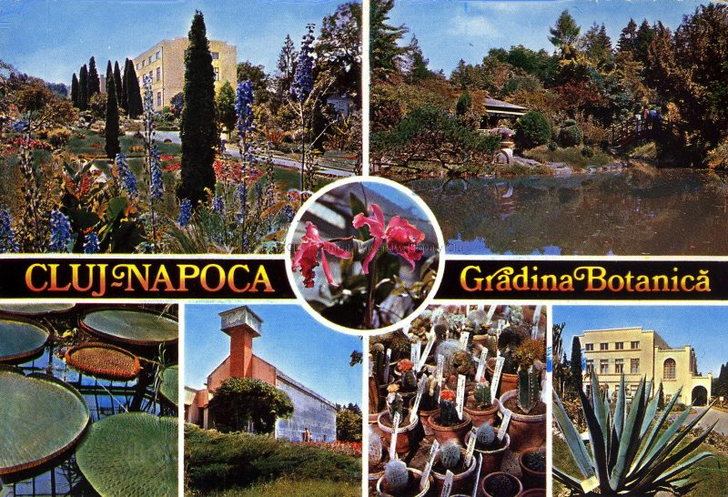 postcard showing scenes from a botanical garden