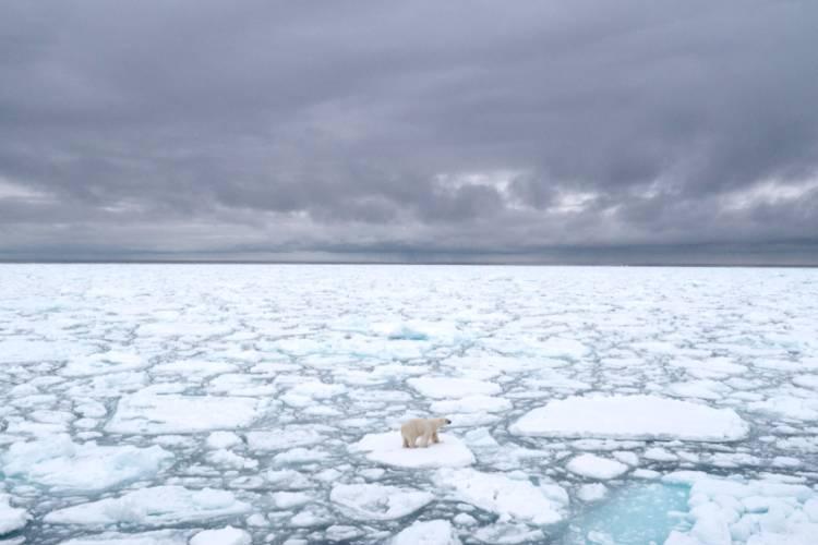 Polar bear laying in the snow