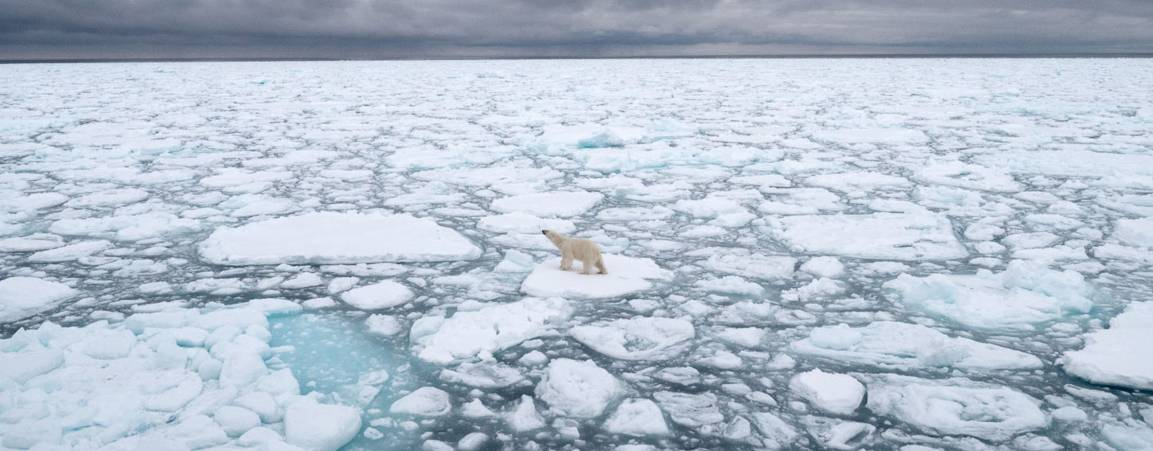Ariel view of a bear on the sea ice