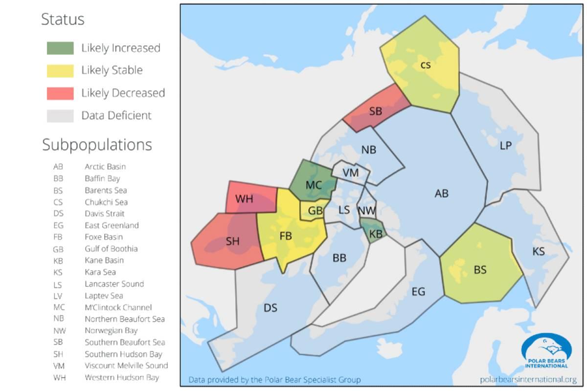 A map of polar bear subpopulation short-term trends