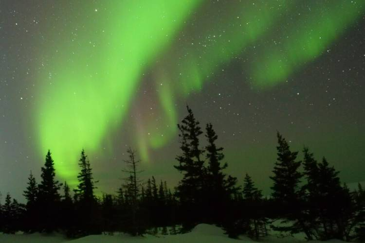 Green northern lights above spruce trees.