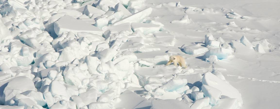 Bear on expansive sea ice