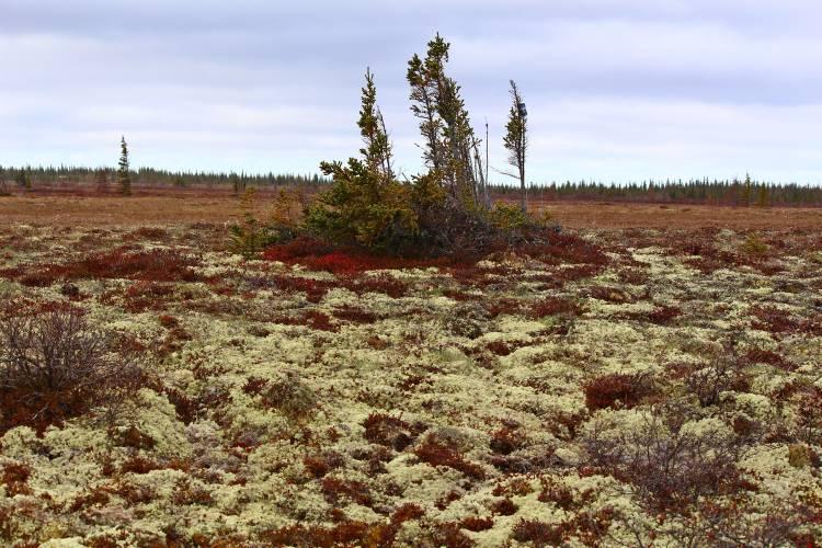 Tundra near Churchill, Manitoba