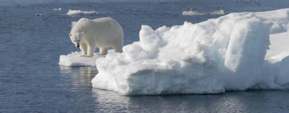 Polar bear on ice looking down at the ocean