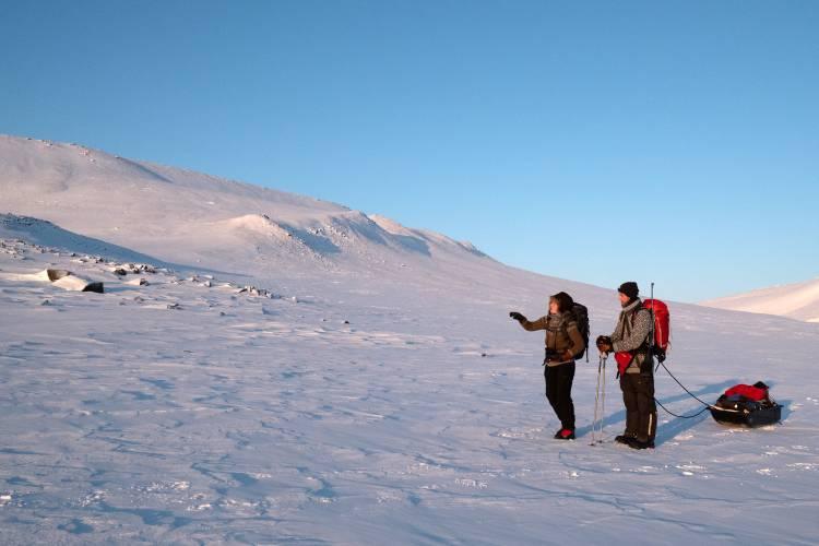 Maternal den polar bear research