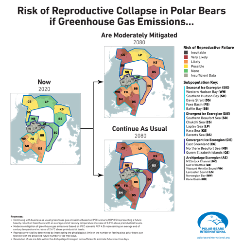 Chart of risk for polar bear populations under different greenhouse gas scenarios