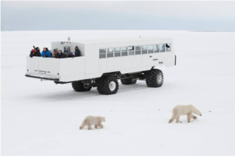 Tundra Buggy One traveling across the Tundra with bears walking beside it