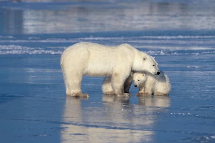 Mama bear embracing her cub