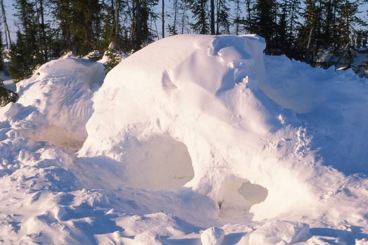 Polar bear den in snow