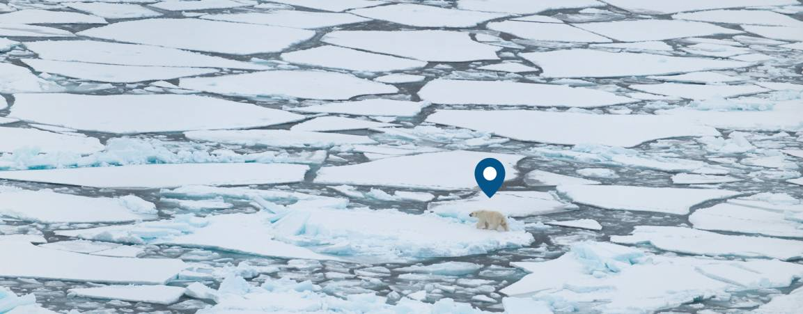 Geographical pin located over ice with bear image