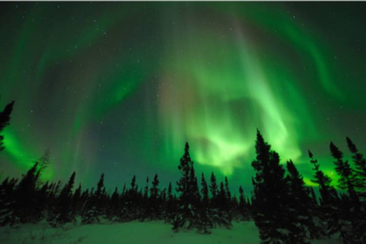 Snowy forest with Northern Lights in the sky