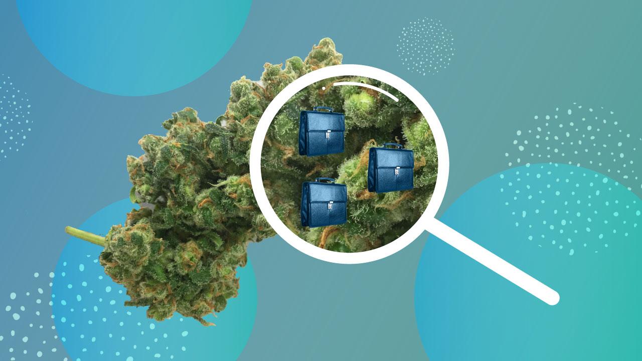 Lift & Co  | Cannabis Reviews, Rewards, Events & More - Lift & Co