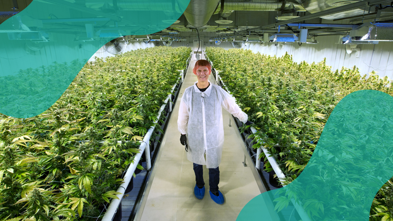 Cannabis Jobs In Canada: Who's Hiring (June 2018 Edition) - Lift & Co