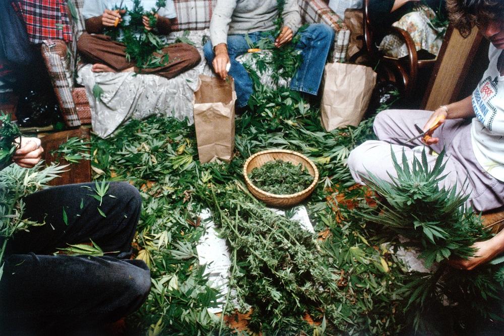 Mel Frank Manicuring, Dutchess County, NY, 1982-1000
