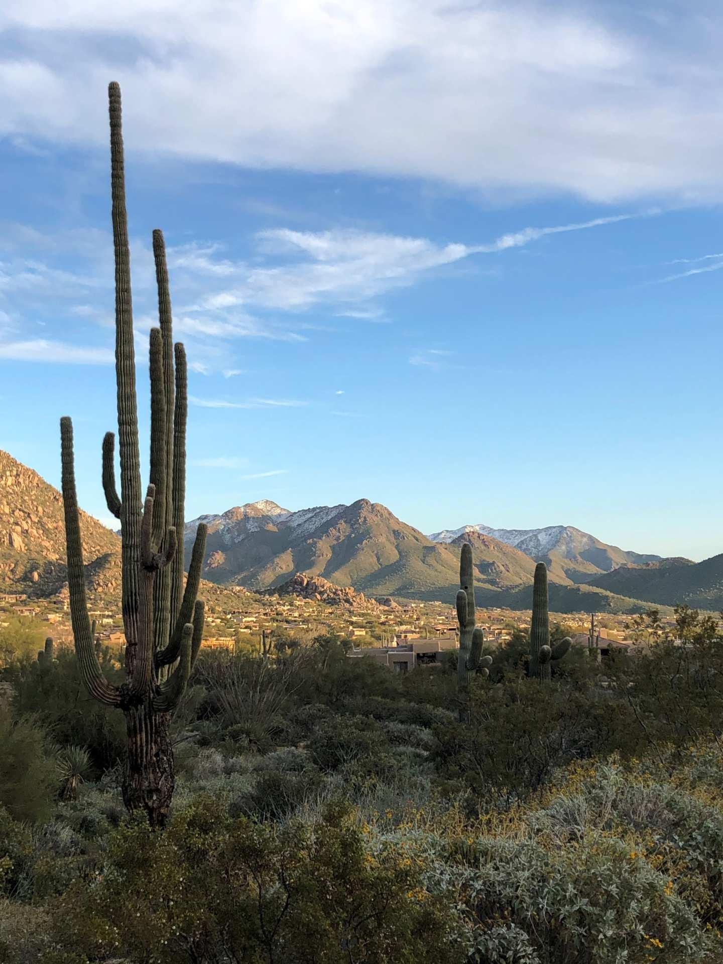 Scottsdale - banner image