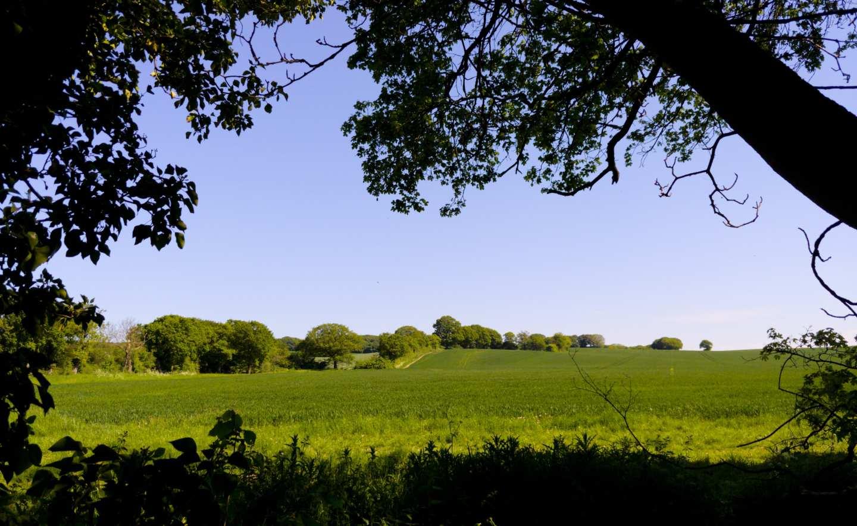 Essex - banner image