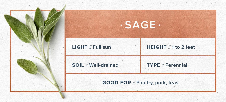 indoor herb garden sage