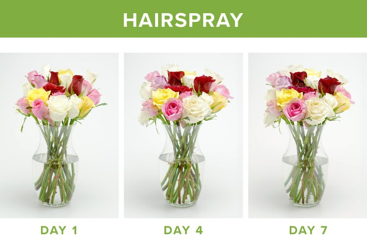 how to make flowers last longer hairspray
