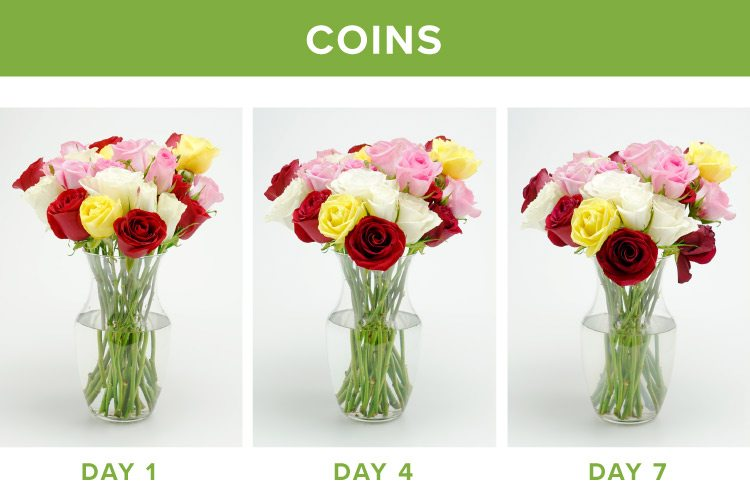 how to make flowers last longer coins