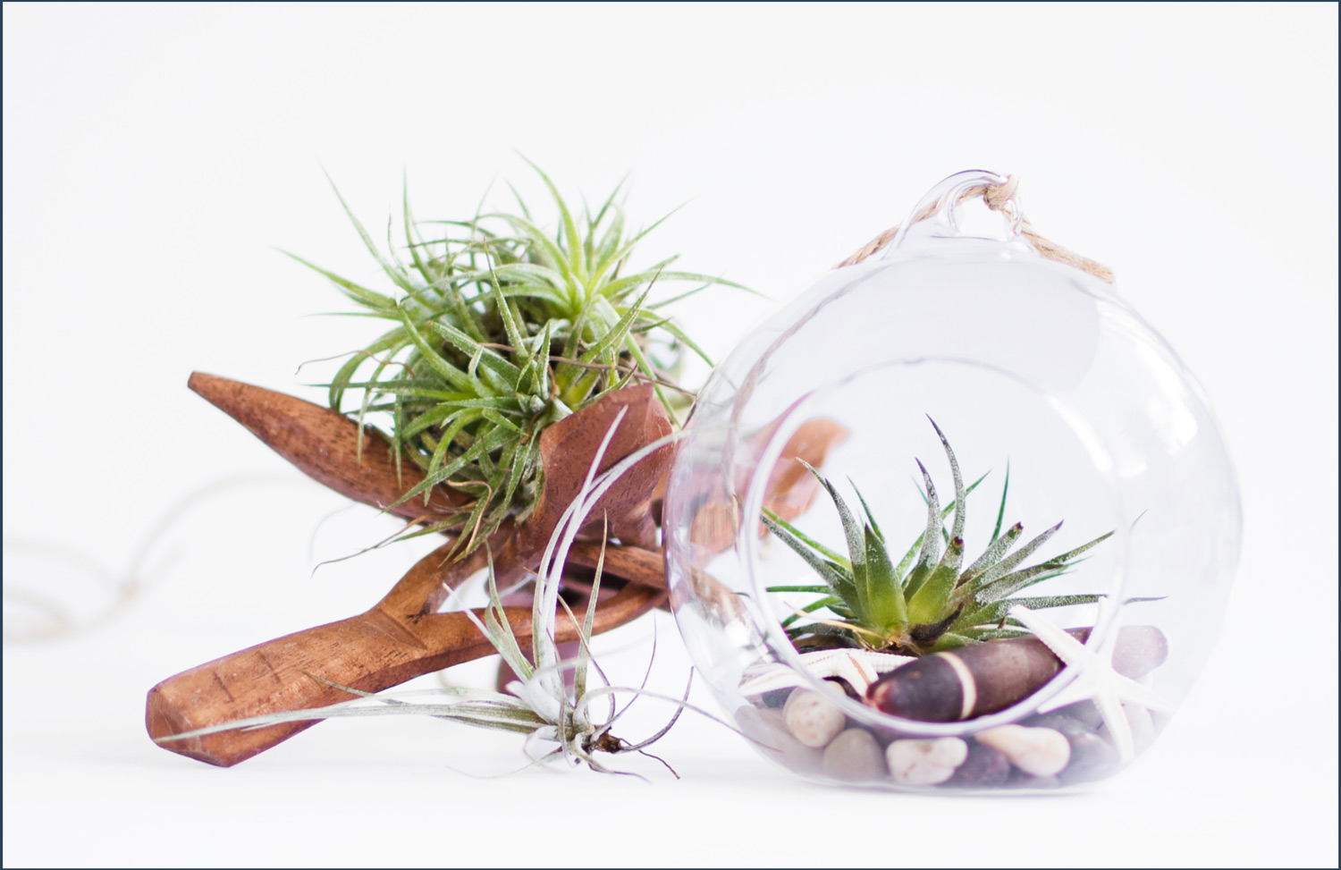 styled image of air plants in a glass terrarium and driftwood