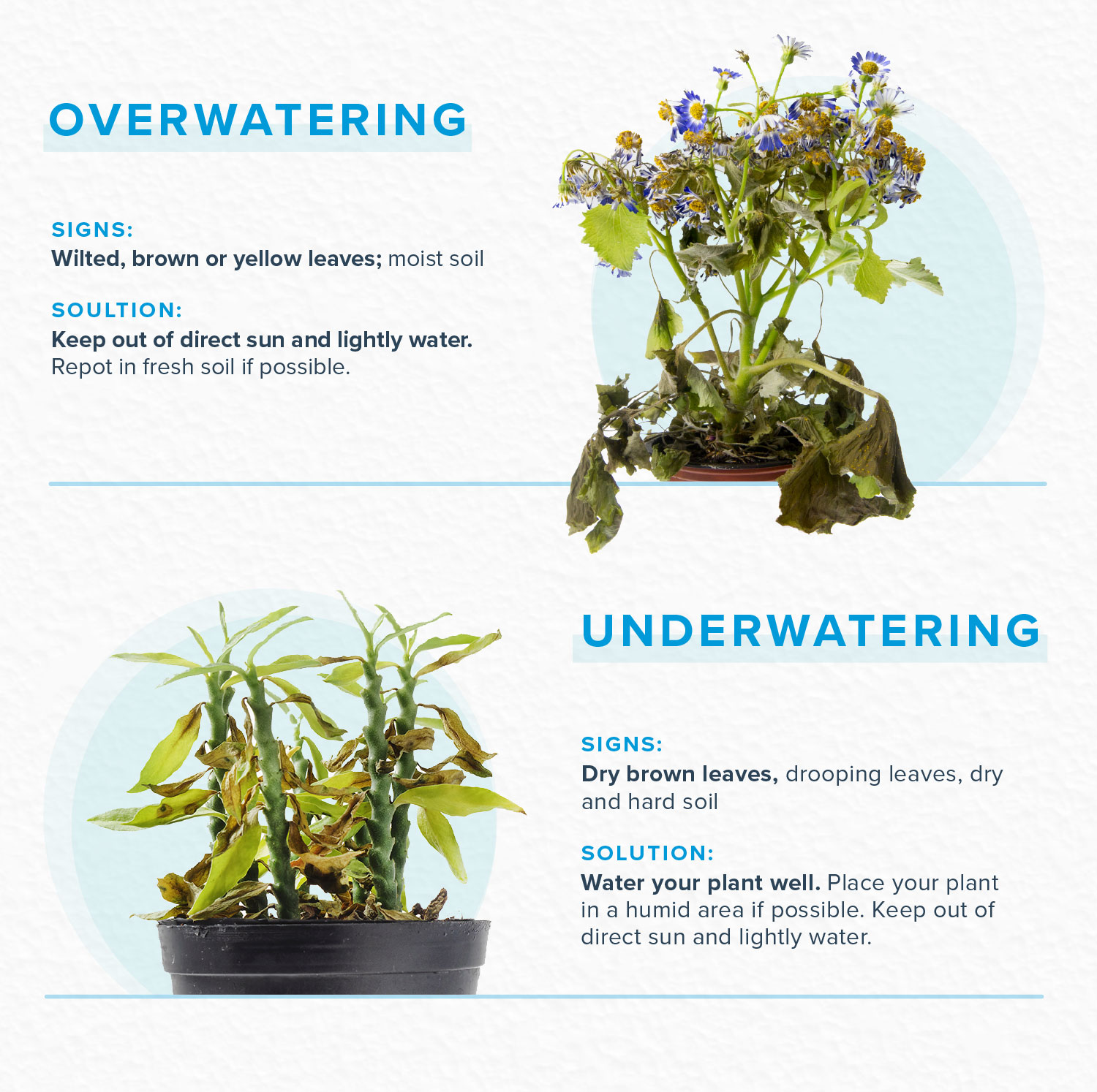 how to revive a plant with water problems