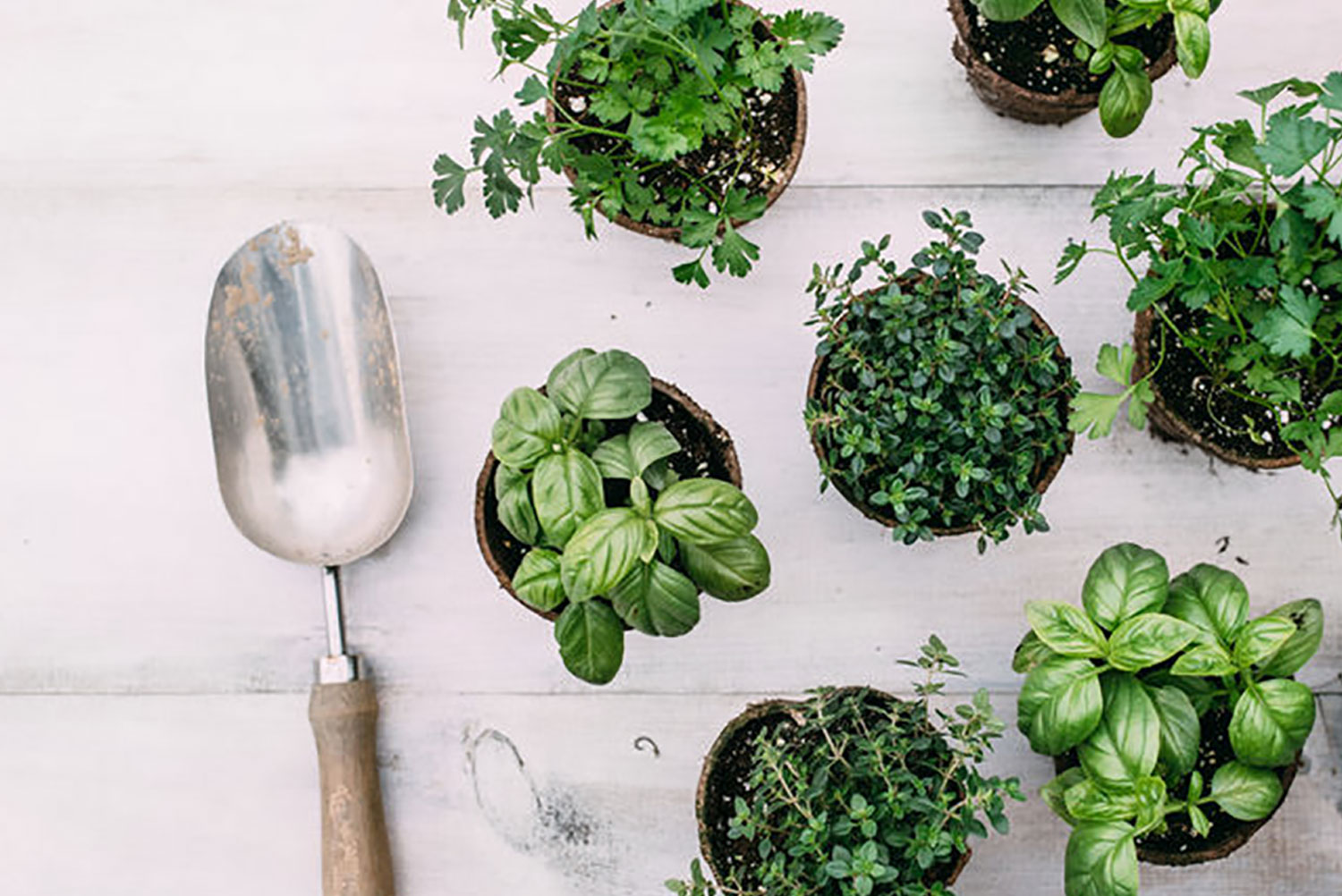 shovel on white wood with potted green plants