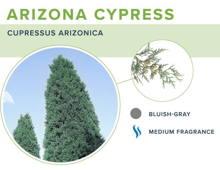 types of christmas trees arizona cypress