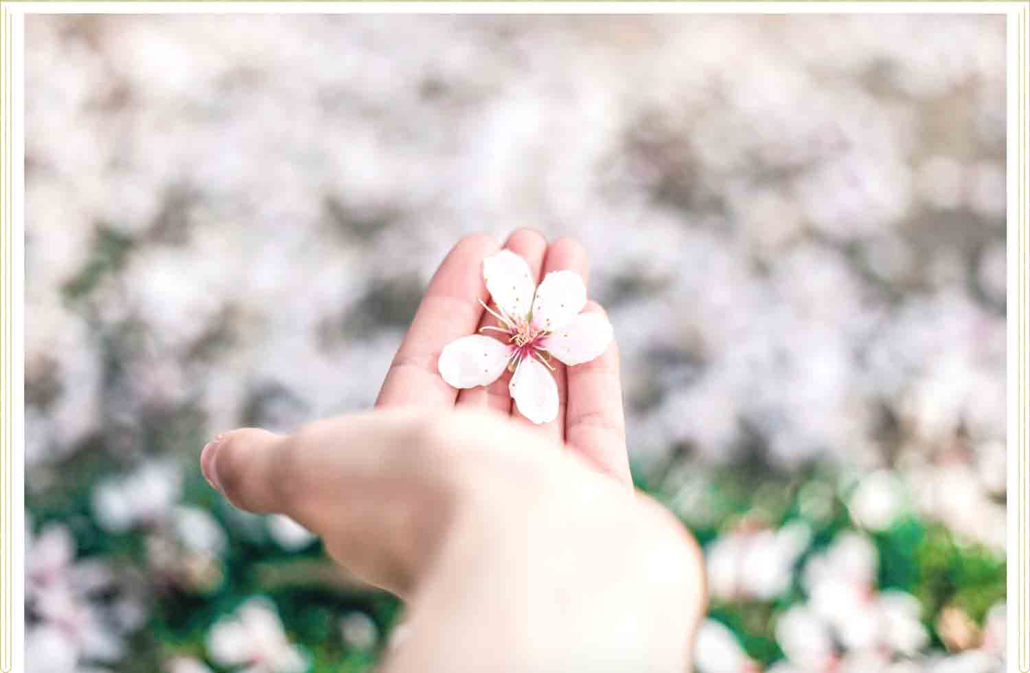 hand holding a pink flower