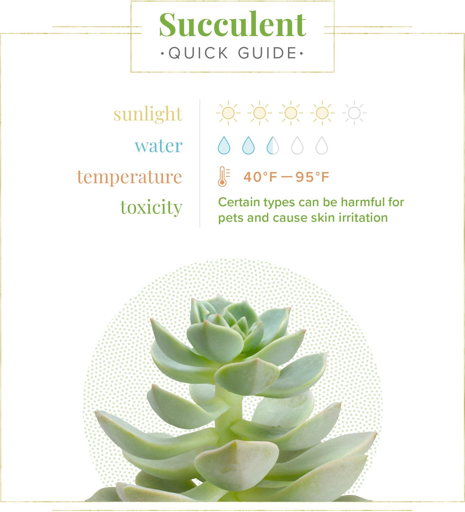 succulent quick care guide