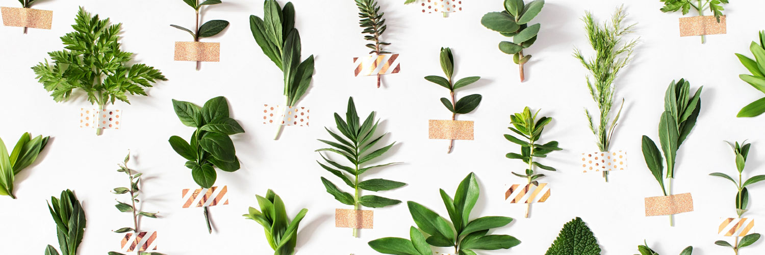A variety of herbs organized as a checkered pattern against a bright white background