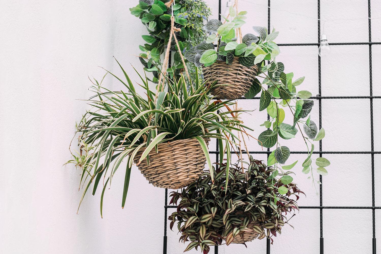 hanging plants in wicker baskets