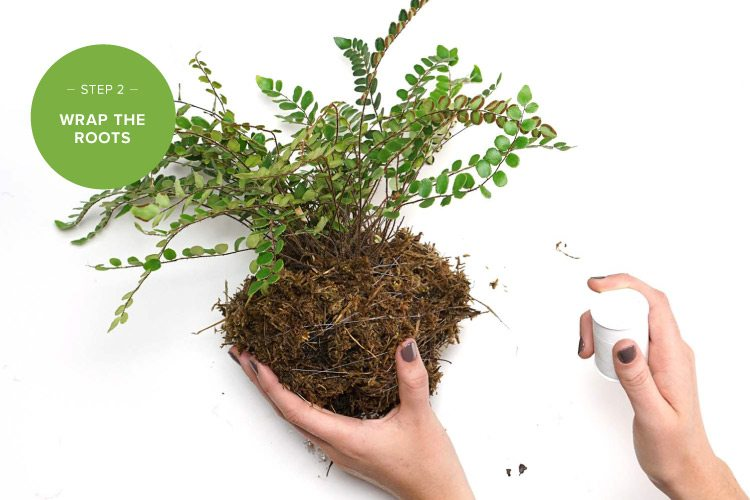 how to make a kokedama string garden step two