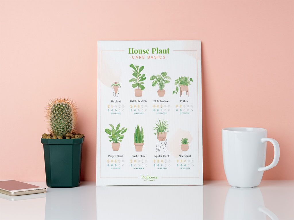 houseplant care basics chart