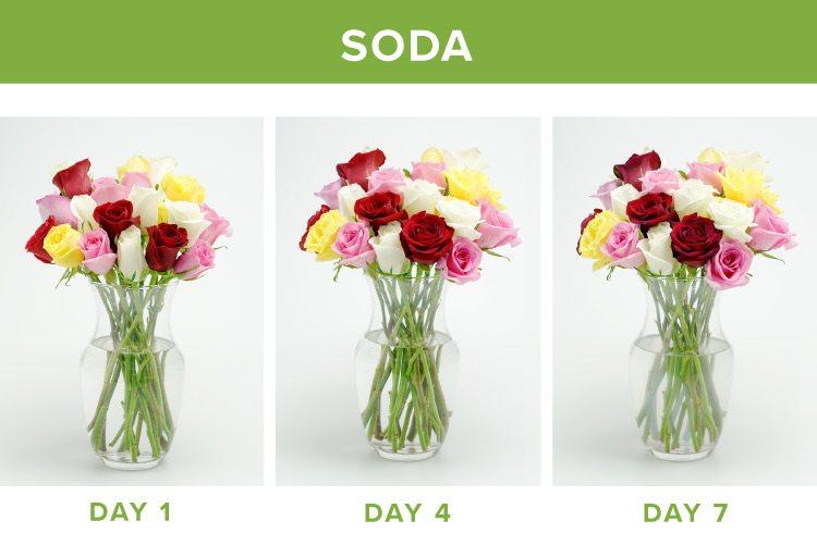 how to make flowers last longer soda