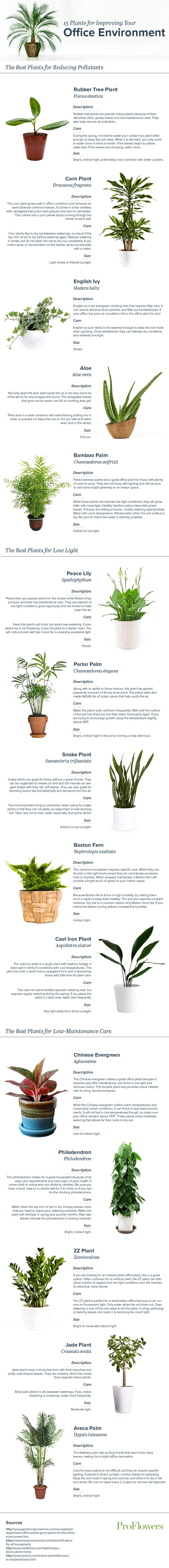 office-plants-final