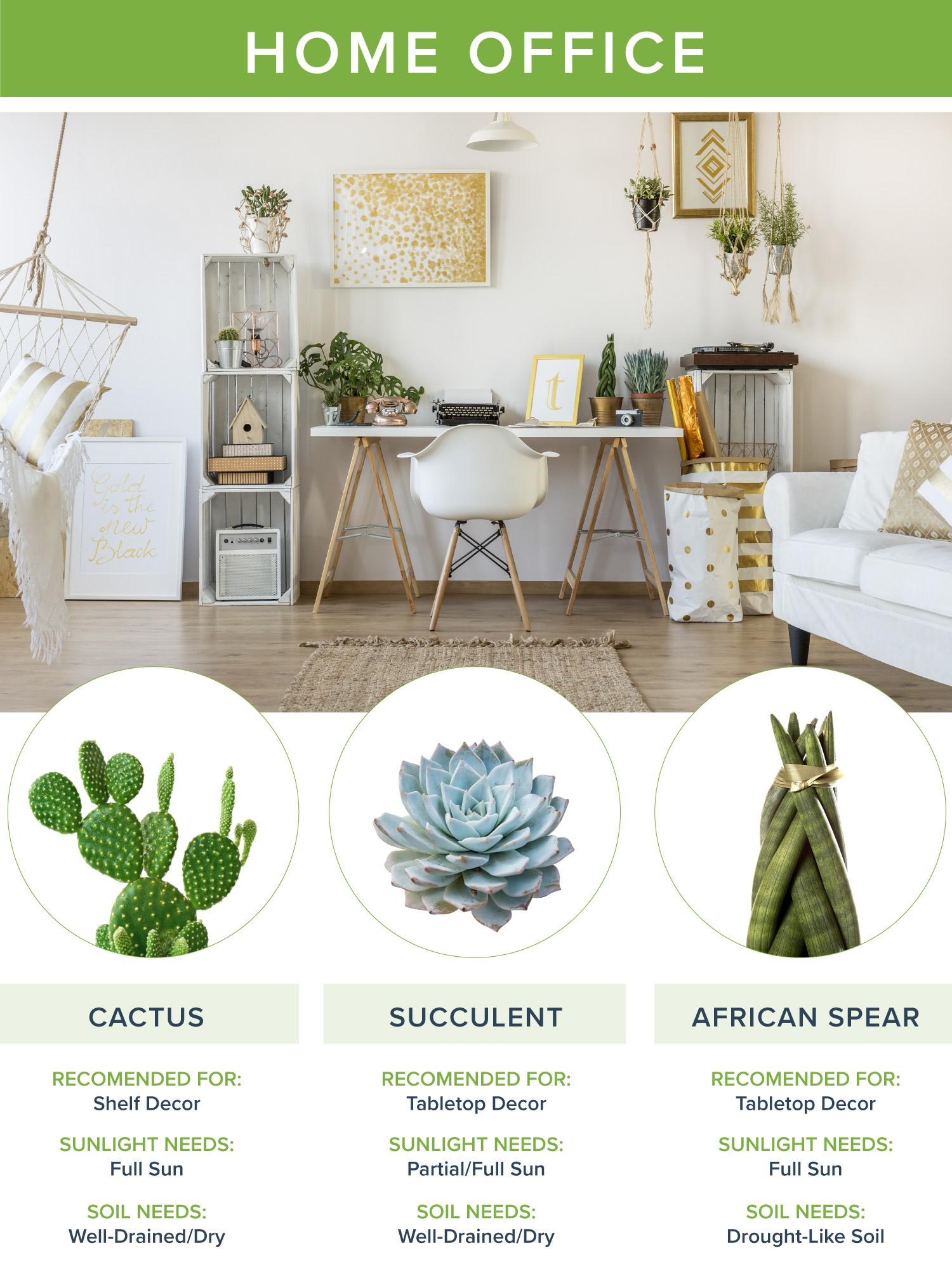 best houseplants home office