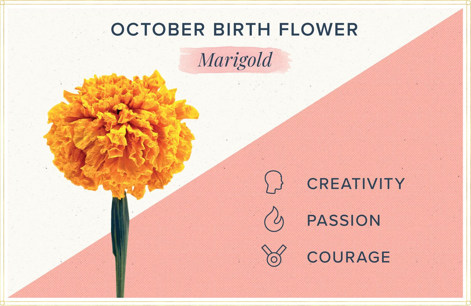 october birth month flower meaning marigold