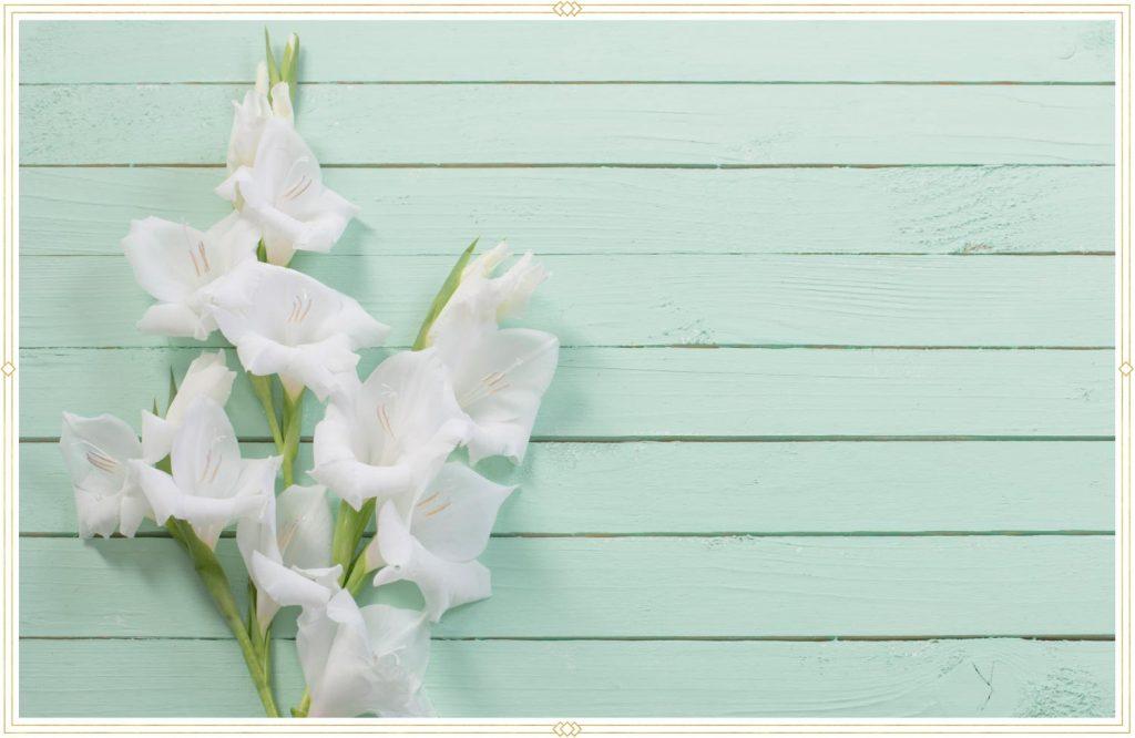 white gladiolus stem with turquoise shiplap background